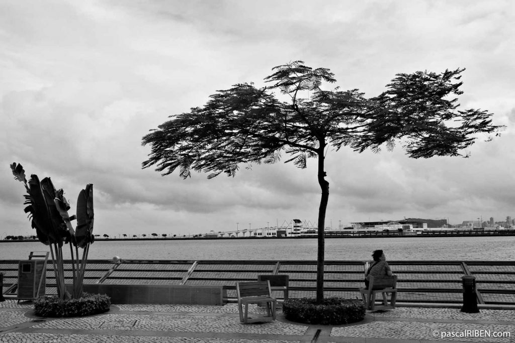 Tree and Woman in Front of the Reservoir, Macau, China