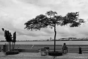 Tree and Woman in Front of the Reservoir - Macau, China