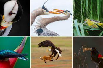Birds - The 2019 Audubon Photography Awards