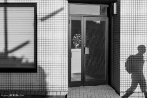 Flowers and shadow in Higashiōsaka, Japan, May 21, 2019