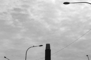 Lonely Bird - Kuala Lumpur, Malaysia