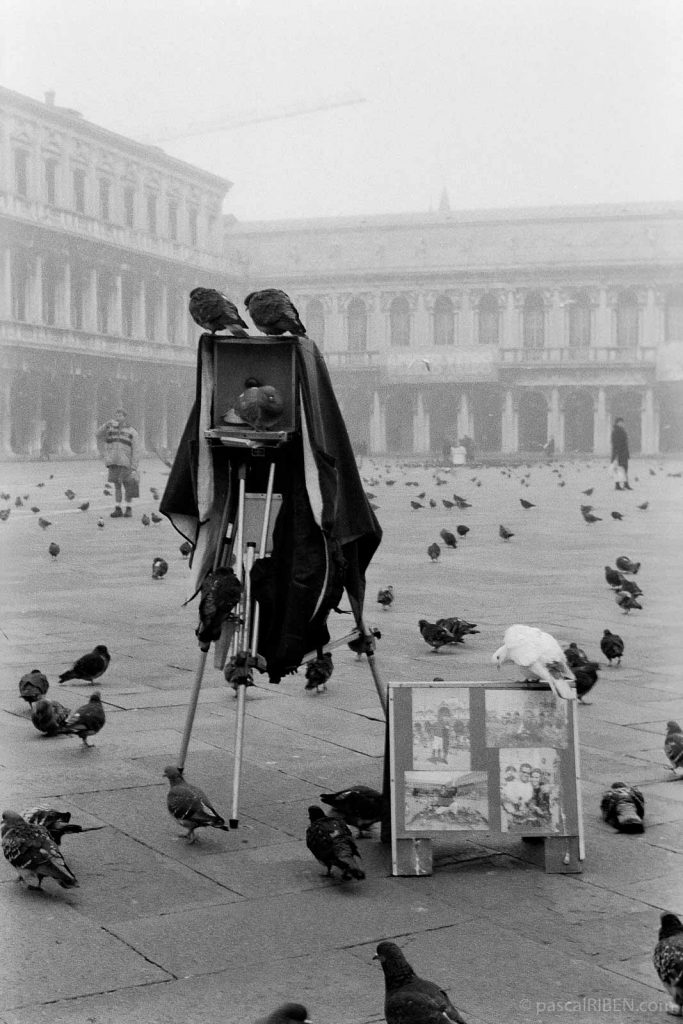 Pigeons and Old Photographic Camera Piazza San Marco - Venice, Italy