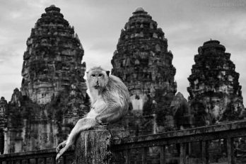 Macaque in front of the Phra Prang Sam Yod temple in Lopburi, Thailand.